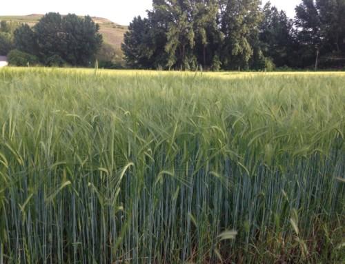 El Consejo de Cámaras pone en marcha un paquete de cápsulas formativas para que las micropymes agroalimentarias del medio rural optimicen el uso de sus recursos